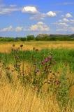 цветастое лето полей Стоковое фото RF