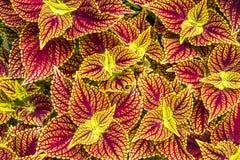 цветастое листво стоковое фото