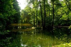 цветастое лето парка озера Стоковое Изображение RF