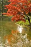 цветастое листво Стоковая Фотография RF