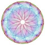 цветастое мандала стоковые фотографии rf