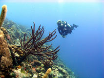 цветастое место кораллового рифа стоковое фото rf