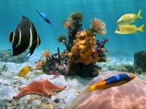 Цветастое морское дно в tropics стоковая фотография