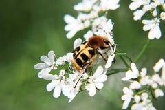 Цветастое насекомое стоковое фото