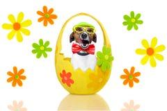 цветастое пасхальное яйцо собаки Стоковая Фотография