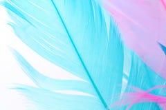 цветастое перо Стоковое Изображение RF