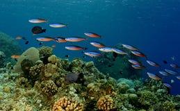 цветастое подводное Стоковое Изображение