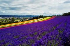 Цветастое поле цветка, Хоккаидо, Япония Стоковые Изображения RF