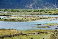 Цветастое река Стоковое фото RF