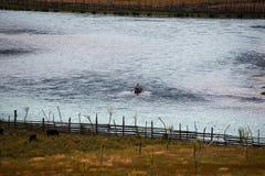 Цветастое река Стоковая Фотография RF