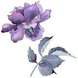 цветасто поднял Флористический ботанический цветок Одичалый изолированный wildflower лист весны Стоковое Изображение