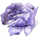 цветасто поднял Флористический ботанический цветок Одичалый изолированный wildflower лист весны Стоковые Фото
