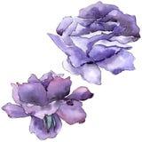 цветасто поднял Флористический ботанический цветок Одичалый изолированный wildflower лист весны Стоковая Фотография