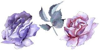 цветасто поднял Флористический ботанический цветок Одичалый изолированный wildflower лист весны Стоковые Изображения