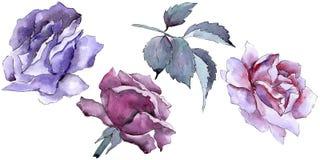 цветасто поднял Флористический ботанический цветок Одичалый изолированный wildflower лист весны бесплатная иллюстрация