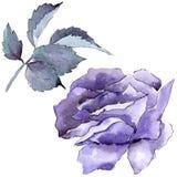 цветасто поднял Флористический ботанический цветок Одичалый изолированный wildflower лист весны Стоковая Фотография RF