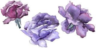 цветасто поднял Флористический ботанический цветок Одичалый изолированный wildflower лист весны Стоковые Фотографии RF