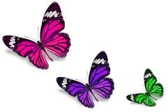 Цветастые бабочки Стоковая Фотография RF