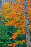 цветастые валы стоковые изображения rf