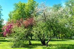 цветастые валы Стоковые Фото