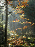 Цветастые древесина или пуща стоковые фото