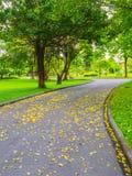 Цветастые листья в парке стоковая фотография rf