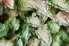 Цветастые листья Стоковые Фото