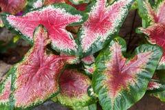 Цветастые листья Стоковое Изображение RF