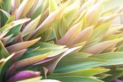 Цветастые листья Стоковые Изображения RF