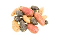 Цветастые картошки изолированные на белизне Стоковые Изображения RF