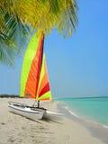 Цветастые катамаран и пальма на пляже стоковые фотографии rf