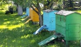 Цветастые крапивницы пчелы Стоковые Изображения RF