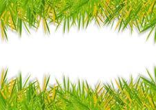 Цветастые листья бамбука на белой предпосылке Стоковая Фотография RF