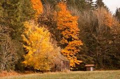 Цветастые листья и амбар Стоковые Фото