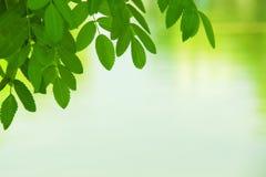 Цветастые листья лета Стоковые Изображения RF
