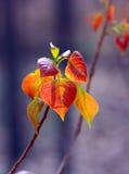 цветастые листья новые Стоковая Фотография