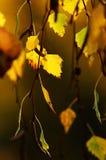 Цветастые листья осени Стоковые Изображения RF