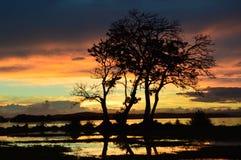 цветастые небеса Стоковая Фотография RF