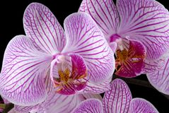 цветастые орхидеи Стоковое Фото
