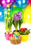 цветастые пасхальные яйца w состава Стоковое Изображение