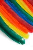 цветастые пер Стоковые Фотографии RF