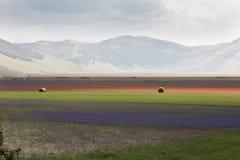 Цветастые поля цветка Стоковые Изображения RF