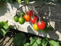 цветастые плодоовощи Стоковое Фото