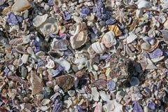 цветастые раковины Стоковые Фото