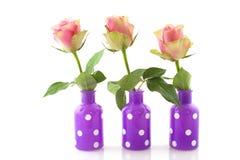 цветастые розовые вазы роз Стоковое Изображение
