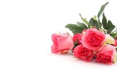 цветастые розы Стоковые Фото