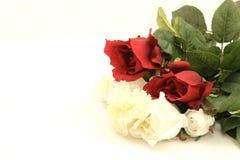 цветастые розы Стоковое фото RF