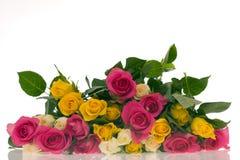цветастые розы стоковая фотография