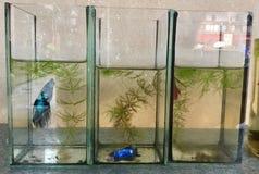 цветастые рыбы 3 садка для рыбы Аквариум стоковая фотография