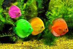 цветастые рыбы стоковое изображение rf